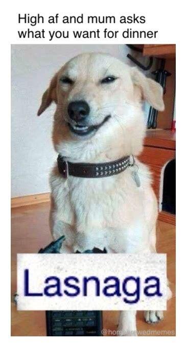 Stoned Dogs Meme - stoner dog meme blank www pixshark com images