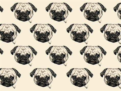 all things pug all things pug shopswell