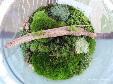 Aquarium Fiber Mini Size M 170 best moss terrarium paludarium vivarium images on