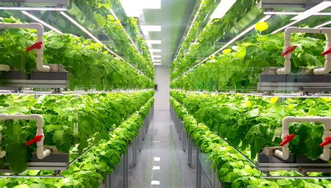 avviare una coltivazione idroponica guida completa