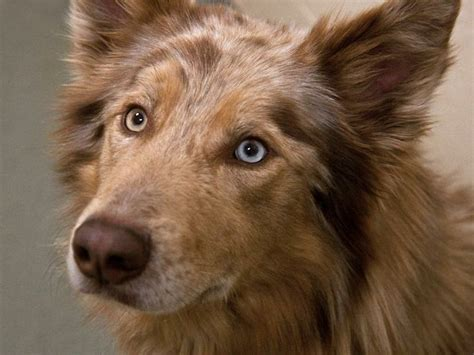 golden retriever rescue league massachusetts 10 images about pets that need homes on golden retriever rescue shelters