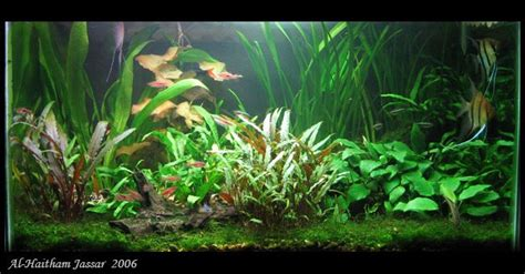 aquarium design exle 573 best aquariums aquascapes images on pinterest fish