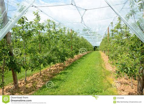 apple france apple orchard in france stock photo image 57943098