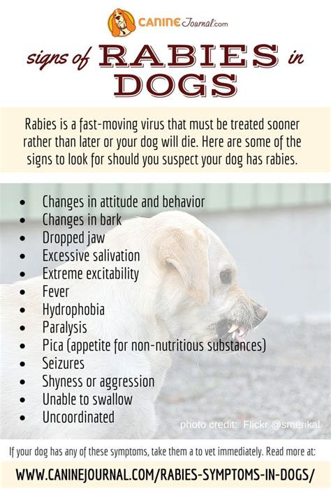 symptoms of rabies in dogs 17 best images about information on best food for dogs for dogs and pets