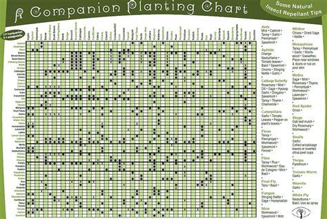 garden chart companion plants chart garden ing pinterest