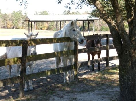 beautiful farm picture of retirement home for horses at