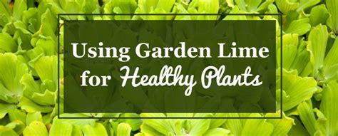 Lime For Gardens Lime For Vegetable Garden