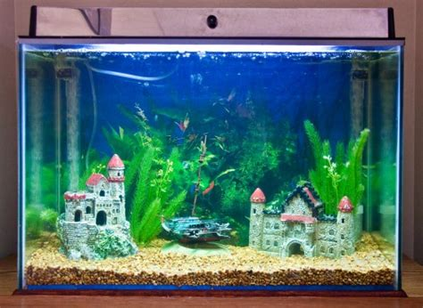 how to keep fish tank water clear 5 tips on how to clean a fish tank properly stay at home