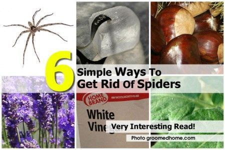 how to get rid of spiders from christmas tree 6 simple ways to get rid of spiders bugs spider