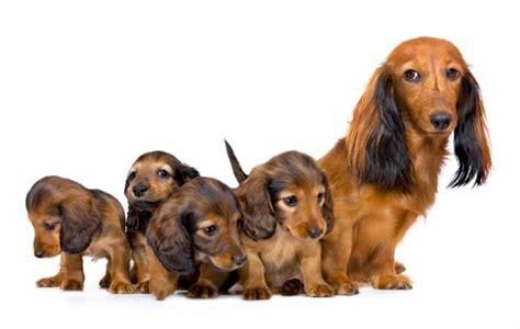 puppy vs choosing your puppy vs dogslife breeds magazine