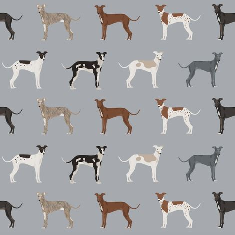 greyhound colors italian greyhound fabric dogs coat colors and