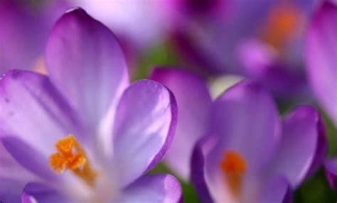 fiori da piantare in primavera bulbi autunnali 10 fiori da piantare ora leitv