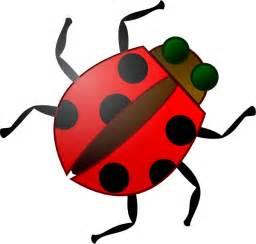Bug clip art at clker com vector clip art online royalty free