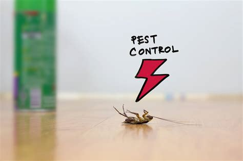what can kill bed bugs how do i kill bed bugs image titled treat bed bug bites