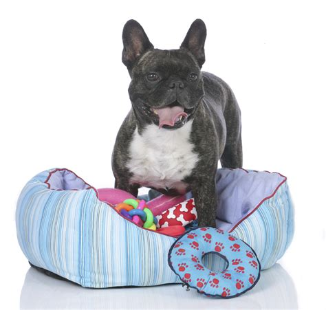 puppies do it yourself diy bed r buzzchatco do it yourself beds and costumes beds and costumes