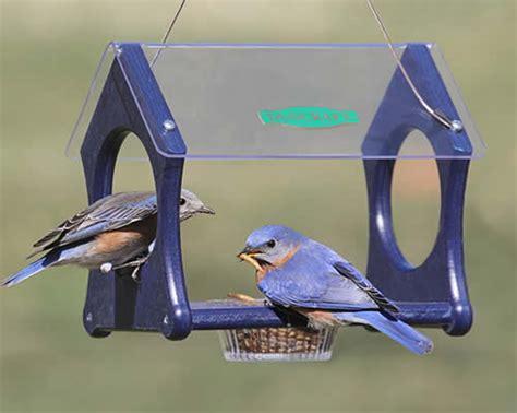 duncraft com duncraft eco fly thru mealworm feeder