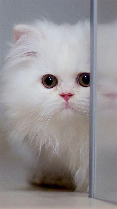 cute wallpaper for xiaomi cute white cat xiaomi mi5 wallpapers hd 1440x2560