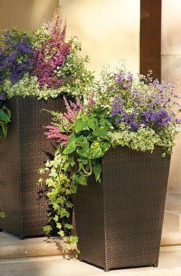 beautiful purple  pink mixed flowers  tall planters