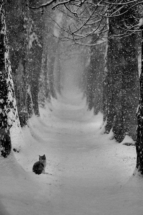 A Snowy Evening Winter Walk Wilderness Portraits By Lp Aiello » Home Design 2017