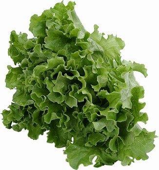 Tds Meter Alat Ukur Nutrisi Hidroponik Paling Murah cara menanam selada lettuce secara hidroponik dengan