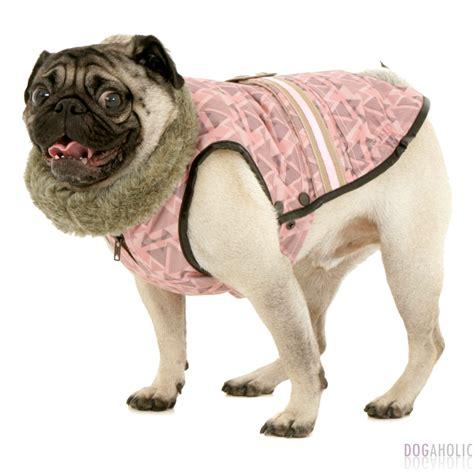 coats for pugs uk florence coat for pugs mops dogaholic