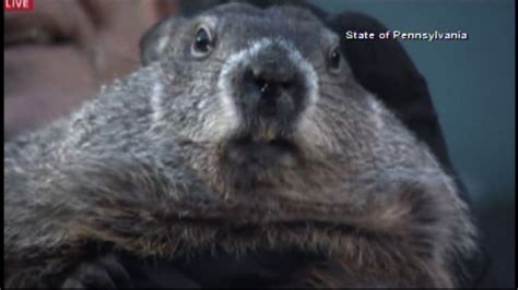 groundhog day pa pennsylvania groundhog predicts early