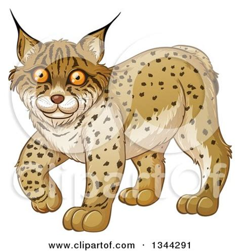 bobcat clipart bobcat clipart animal clipground