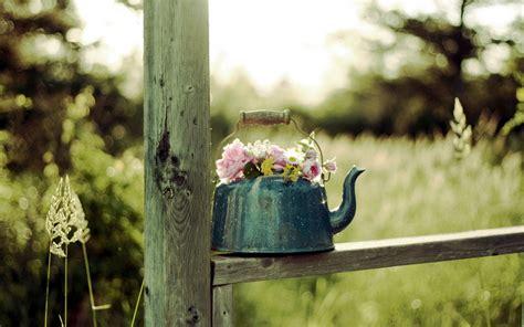 wallpaper flower in pot lovely flower pot wallpaper 42738 1920x1200 px