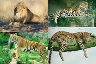 Leopard Vs Cheetah Vs Jaguar Cheetah Vs Leopard Vs Jaguar Vs Tiger Vs E Fashion