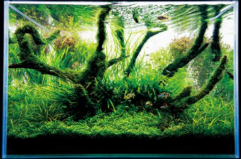 aquarium design japan japanese aquarium design the best aquarium terrarium