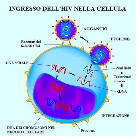 test per l hiv hiv e aids sintomi test contagio trasmissione e cure