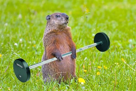 groundhog day length fitness time is now hudson valley news network