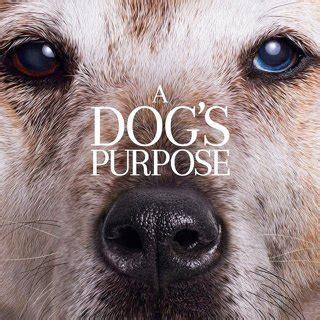 a s purpose soundtrack a s purpose 2017 pictures trailer reviews news dvd and soundtrack