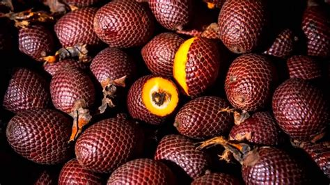 1 fruit in the world 10 of the strangest fruits in the world