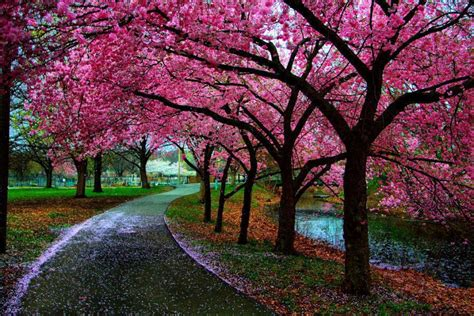 beautiful spring beautiful spring spring photo 34510479 fanpop