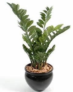 Impressionnant Plantes Grasse D Interieur #5: zamia-plantes-grasse-artificielle-1851--799x1000--lou.jpg