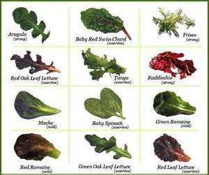 leafy green salads as a main course splendid recipes and