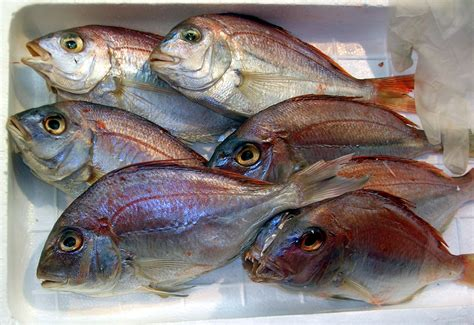 Tuna Fish Helps Lead Detox by 5 Tips To Detoxify Your Of Mercury And Heavy Metal