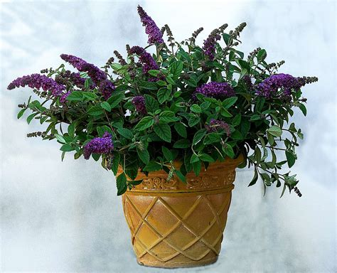 heat tolerant plants low moisture heat tolerant plants greenhouse grower