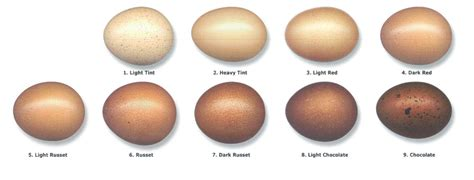 egg color chart marans