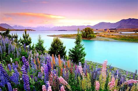 flower wallpaper nz lake tekapo new zealand feel the planet