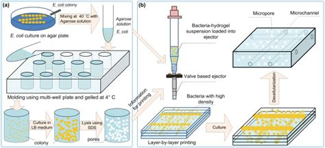 illustrator pattern density a e coli encapsulation in hydrogels as porogens and