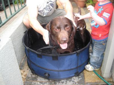 portable collapsible dog bath dog classifieds  pet