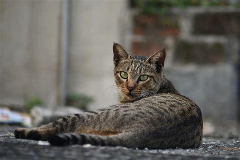 repellente gatti giardino repellente per gatti naturale i migliori fatti in casa