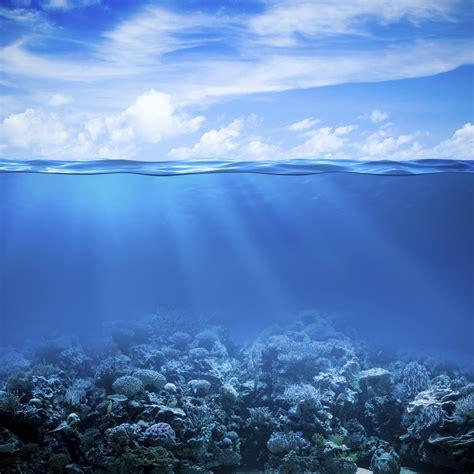 wallpaper coral reef   sea underwater hd