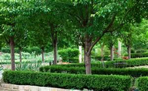 Cool Backyards With Pools New Ornamental Pears Burke S Backyard
