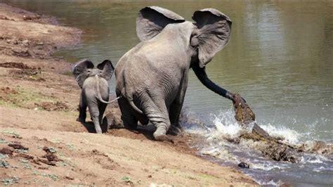 5 Animales Que Deberias Ver by 5 Animales Heroicos Que Salvaron A Otros Animales