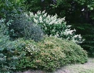 shrub border for privacy
