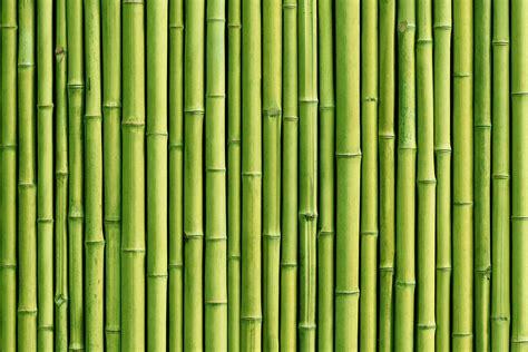 Green Wallpaper For Walls Designs   www.pixshark.com