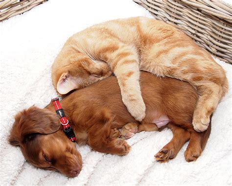 dogs and cats 17 pawsome photos prove cats and dogs can make the
